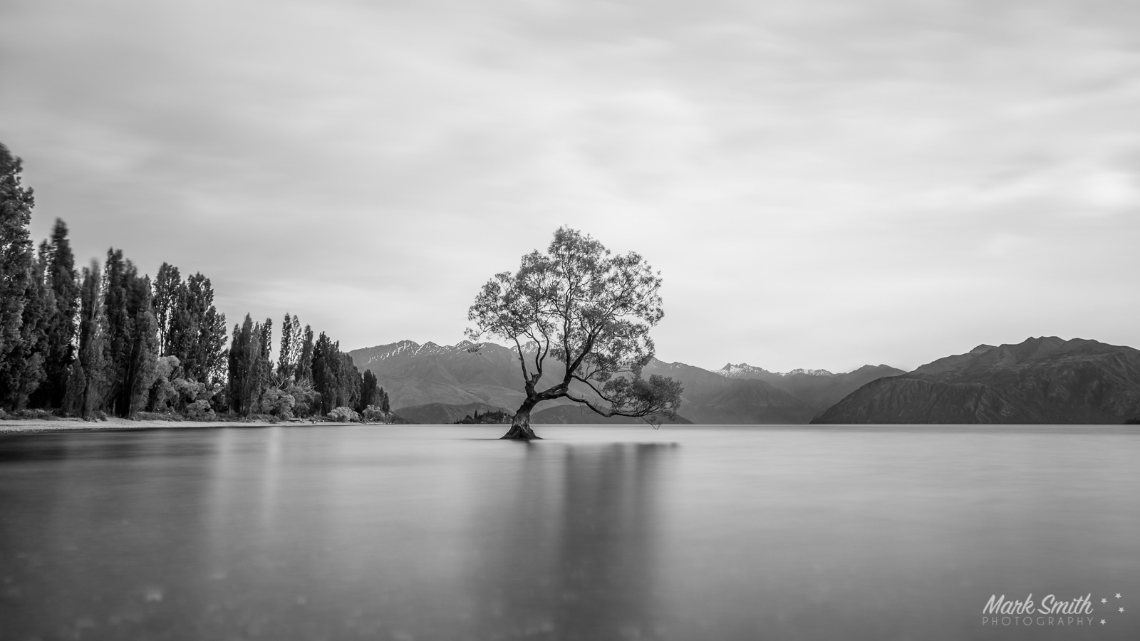 Wanaka Tree Black and White